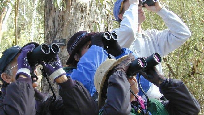 Bring along a good pair of binoculars on bird-watching excursions.