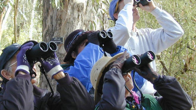 Bird watching is a popular activity at local parks and trails.