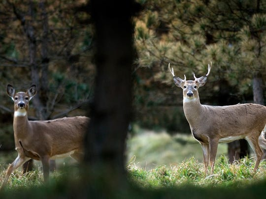 Thousands of hunters will be trying to bag a deer during firearms deer season, which starts Sunday in Michigan