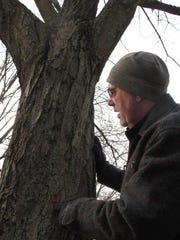 Burlington City Arborist Warren Spinner examines a