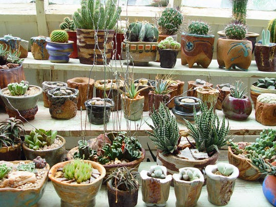 Small cactus and succulent collections by private growers