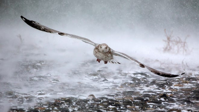 """A seagull takes flight in high winds and blowing snow as a massive winter storm begins to bear down on the region on January 4, 2018 in Hull, Massachusetts. The """"bomb cyclone"""" was expected to dump heavy snows in New England as the storm system moved up the U.S. east coast."""