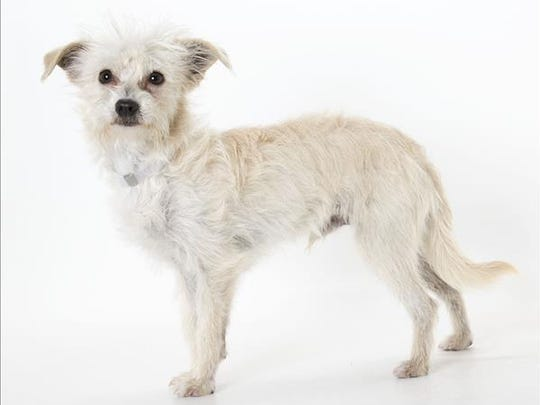 Spca For Monterey County Pets Of The Week