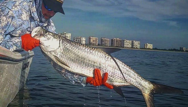 Jayson Arman of That's R Man land based fishing charters out of Billy Bones Bait and Tackle in Port St. Lucie caught and released this tarpon while fishing after Hurricane Matthew in the Indian River Lagoon.