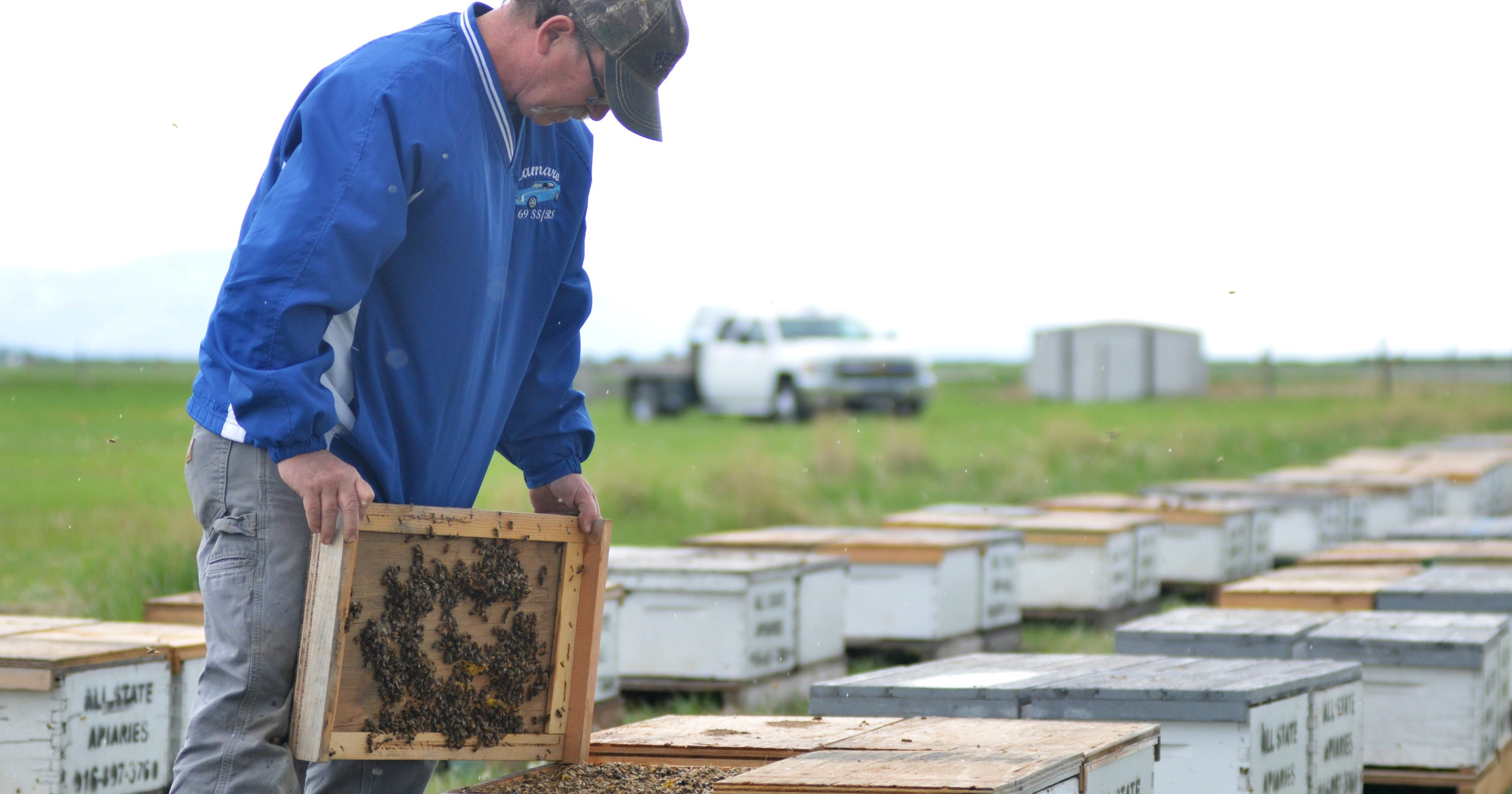 Russians reportedly stung in stolen bee case, Choteau