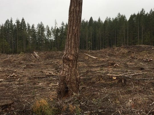 The city's Kingsway logging site.