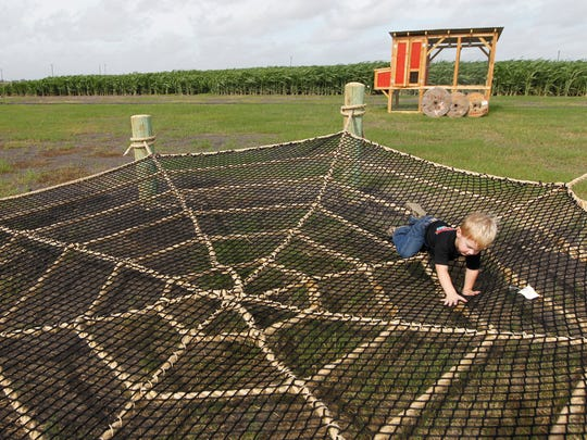 Rachel Denny Clow/Caller-TimesThe Rockin' K Maze at 5385 County Road 52, Robstown offers activities like pumpkin bowling, farmer foosball, tug-o-war, kiddie korral and cow train in addition to the maze.