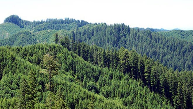The Elliott State Forest covers 92,000 acres, including about 84,000 acres of Common School Fund land in Coos and Douglas counties.