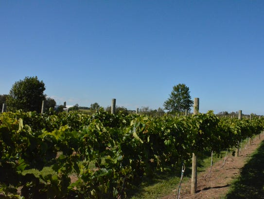 The vineyard at Cold Country Vines & Wines.