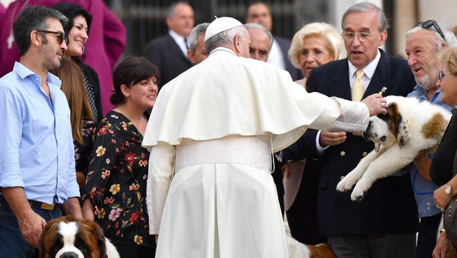 Pope Francis caresses a Saint Bernard puppy during his weekly general audience  in St.Peter's square.