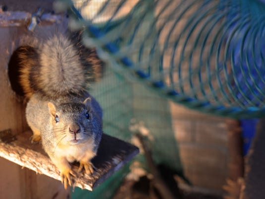 squirrelmender-4.jpg