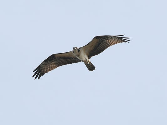 Meadowlands Birding Fest