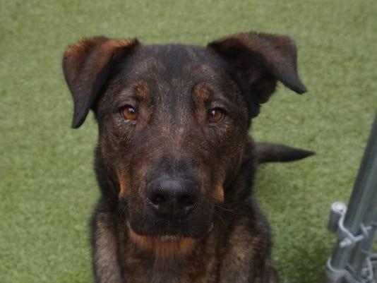FMN Pets 0125 Kruger
