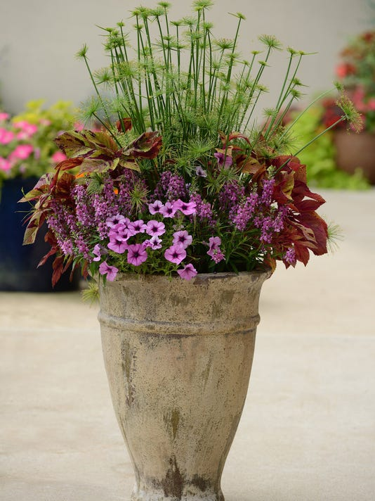 Spring container garden trends: Experts suggest exciting plant choices