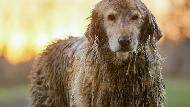 Tough Mudder will introduce its first Ruff Mudder for dogs in March.