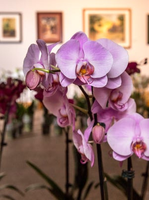 Arts Visalia still has about 250 orchids in several colors available in their annual fundraising sale. They can be purchased at the gallery all week from noon to 5:30 p.m. or at Bank of the Sierra, Wells Fargo on Mooney and Citizens Bank. The $25 per plant helps the non-profit organization develop and promote art in the community.