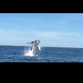 Captain films whale's amazing jump off Long Branch