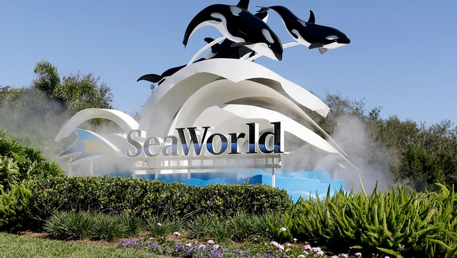 SeaWorld reports a dip in visitors and revenue, sending shares plunging.