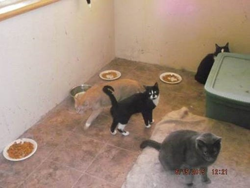 Ohs Cats For Adoption