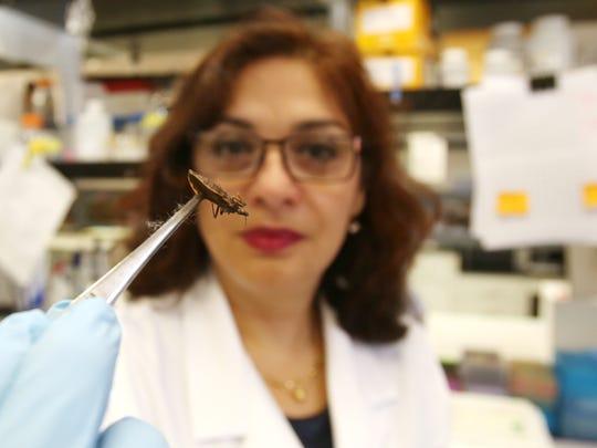 Rosa Maldonado, Ph.D., holds a kissing bug with a pair