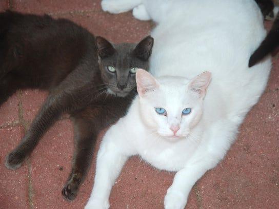 Cat Lady (6).JPG