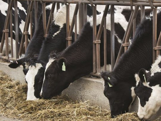 A February 2017 report by the National Center for Dairy Excellence Milk shows that in the midst of price-killing oversupply, we increased milk production in the last year  by 2.5 percent nationally, with 54,000 more cows and a 1.9 percent increase in milk production per cow. In January alone, the nation's dairy herd grew by 6,000 head.