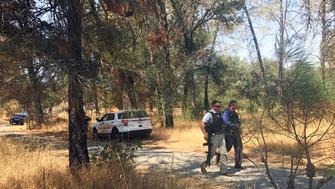 In this Aug. 1, 2017 file photo, officers search for a suspect after a shooting near the garden of a rural Rastafarian church in Dobbins, Calif. Northern California authorities have arrested 18 people and raided a dozen sites connected to marijuana operations.