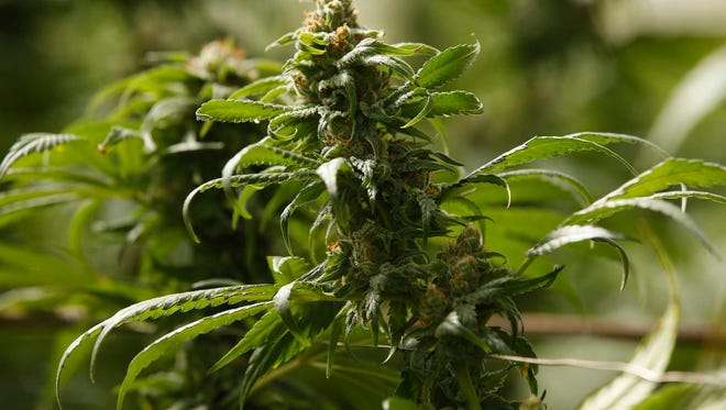 Shelby County's marijuana ordinance is expected to fail in the final vote on Monday.