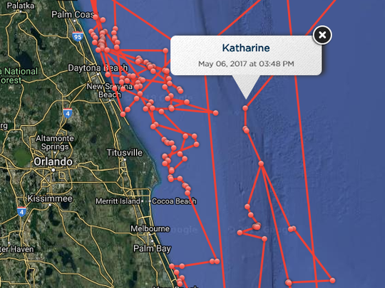Katharine the great white shark pinged off the coast of Brevard about 60 times in 2014 and 2015.