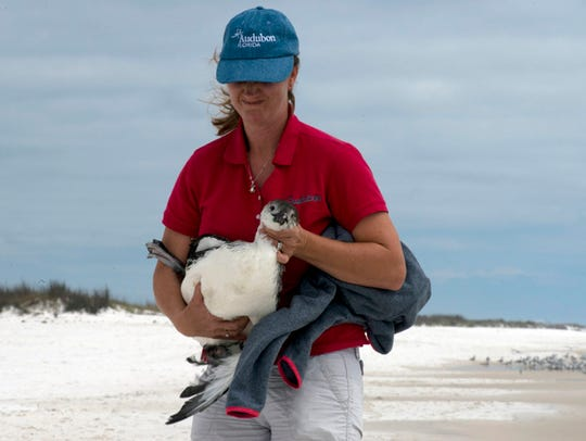 Caroline Stahala Panhandle Shorebird Program Manager