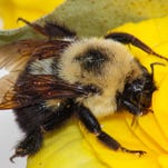 Eat right: How to 'bee' informed