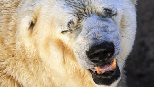 A March photo released by Greenpeace shows Arturo.
