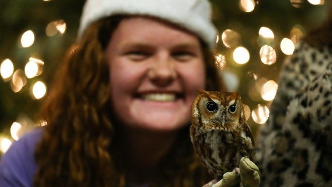 Visitors take photos with eastern screech owl Ponyo during Deck the Hollow at Bear Hollow Zoo in Athens, Ga., on Friday, Dec. 6, 2019.