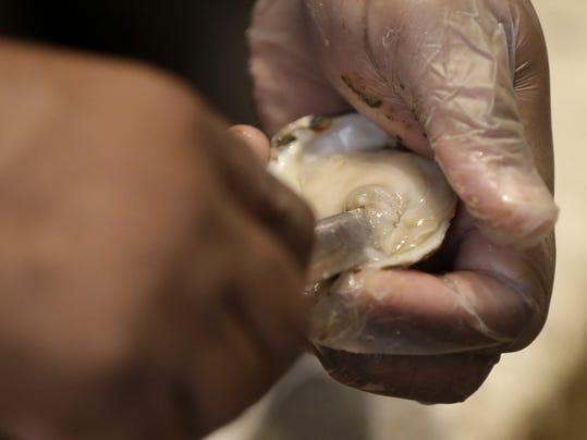 ODW Oyster Harvest