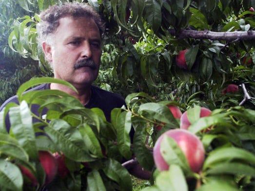 Text santo john maccherone and white peaches on the tree at circle