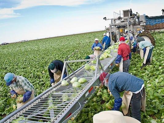 Farmworkers in Arizona