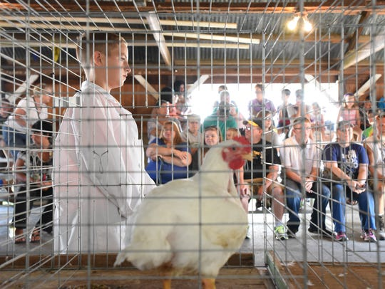 A youngster waits for his chicken to be judged during