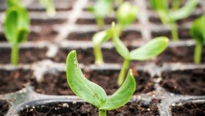 Healthy plants from local gardens are available at the Master Gardeners' spring plant sale.
