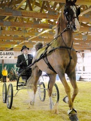 Phil Meyer parades his Saddlebred horse Oban in the