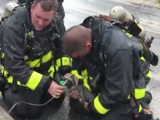 Palm Bay firefighters administer oxygen to a kitten