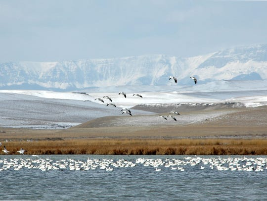 Migration time at Freezout Lake between Choteau and