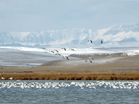 """Migration time at Freezout Lake between Choteau and Fairfield is a scene in the new photo book """"Montana's Rocky Mountain Front."""""""