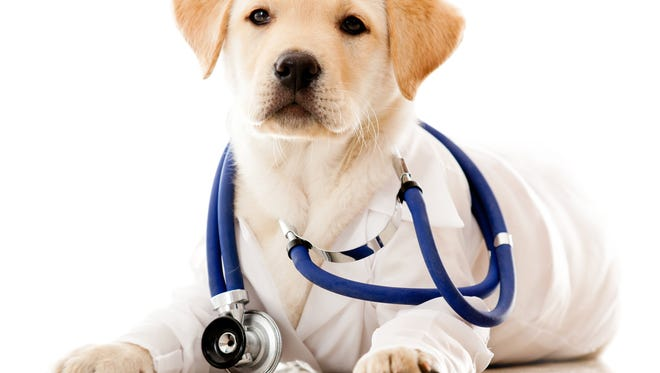 People Assisting Animal Control will offer free spay and neuter surgeries for Labradors and Labrador mixes on Tuesday, Feb. 28, in honor of World Spay Day.