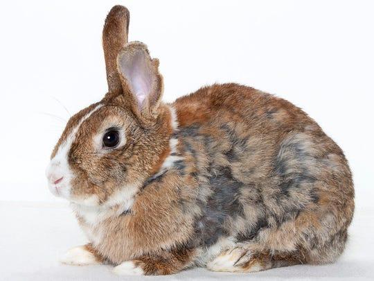 Phil, male rabbit. No. 97548.