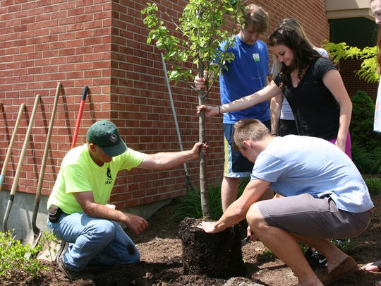 Carl Jones, senior groundskeeper with the Vestal School District's Facilities and Operations Department, left, supervises the planting of the Dina Jacobson memorial tree May 19. Student body vice president Cassie Canino and treasurer Sam Barnum, both 18, help hold the tree upright with student government representative Devin Henderson, 18.