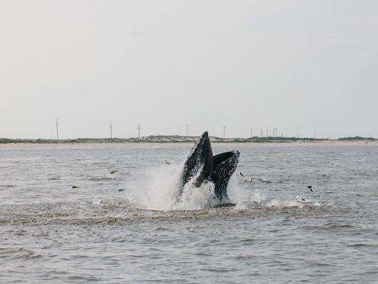 20150712_fishing-186 (2)