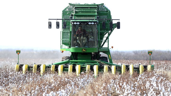 Farmers strip cotton near Miles. An end to NAFTA could deal a serious blow to agriculture in Texas.