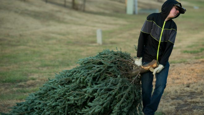Andrew Barclay, 13, of Newburgh, Ind., and a first class scout in Troop 315, hauls a tree to the sales lot to replace a recent purchase.