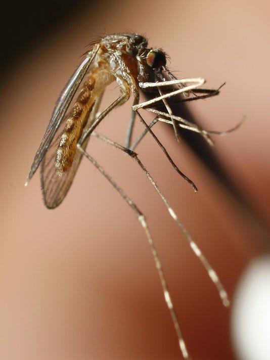 WestNilemosquitos