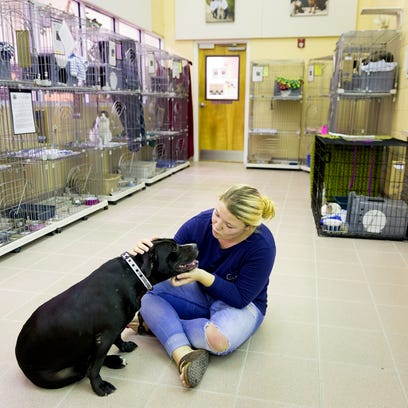 Naples resident Ashley Viconti gets to know Darcy,